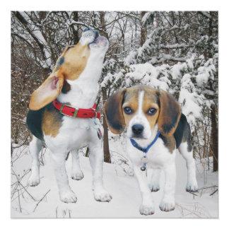 Howling Beagle Pup & Beagle Buddy Poster