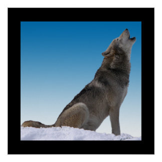 Howling Wolf Custom Border Color Poster