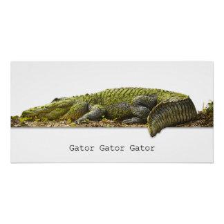 HUGE 'Gator Gator Gator' Photograph