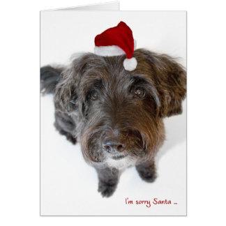 Humorous Christmas Card - Dog in Tiny Santa Hat
