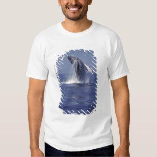 Humpback whale breaching (Megaptera T Shirt