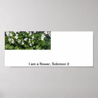 I am a flower poster