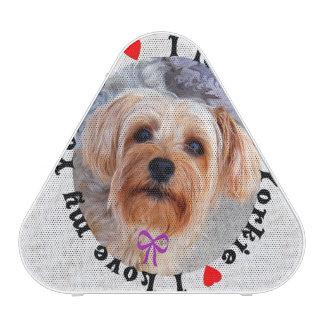 I love my Yorkie Female Yorkshire Terrier Dog