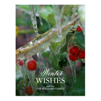 Ice-coated holly berry shrubs after storm postcard