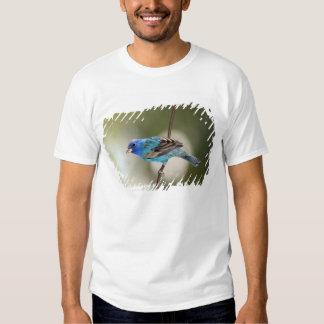 Indigo Bunting perched on bare branch T Shirts