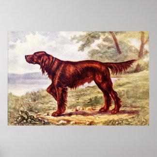 Irish Setter 1900 Illustration of Sporting Dog Poster