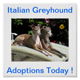 Italian Greyhound Dog Adoptions Today Signs Poster