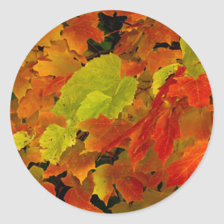 Itasca State Park, Fall Colors Round Sticker