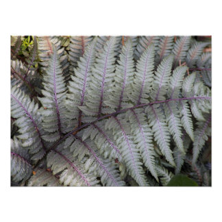 Japanese Painted Fern Floral Poster