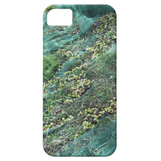 Just picked olives on the net during harvest time iPhone 5 cases