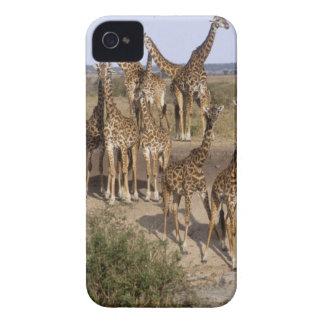 Kenya: Masai Mara Game Reserve herd of one dozen Case-Mate iPhone 4 Cases