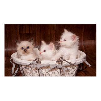 kitten pack of standard business cards
