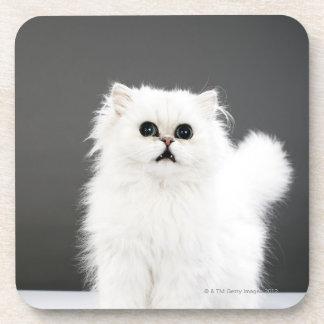 Kitten Portrait Beverage Coasters