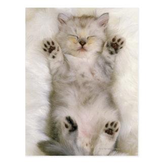 Kitten Sleeping on a White Fluffy Carpet, High Postcard
