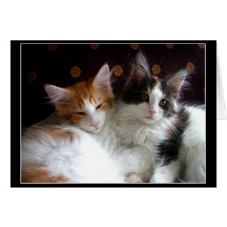 Kittens in Love greeting card