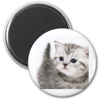 kitty time 6 cm round magnet