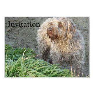 Korthals Griffon - Tsjip beautiful portrait 13 Cm X 18 Cm Invitation Card