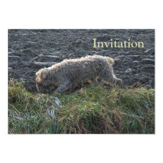 Korthals Griffon - Tsjip roaming the land 13 Cm X 18 Cm Invitation Card
