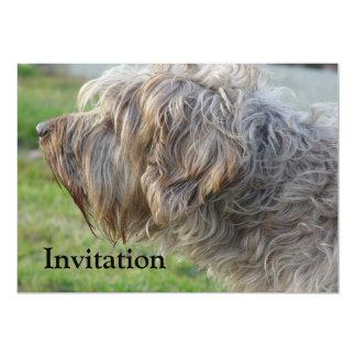Korthals Griffon - Tsjip smelling fowl 13 Cm X 18 Cm Invitation Card