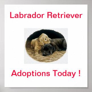 Labrador Retriever Dog Adoption Today Signs Poster