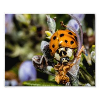 Ladybug Climbing On A Flower Photo