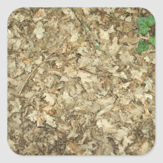 Leaves. Woodland floor. Leafy ground. Square Sticker