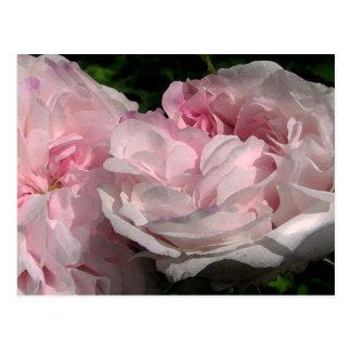 Leda Rose Flower Postcard