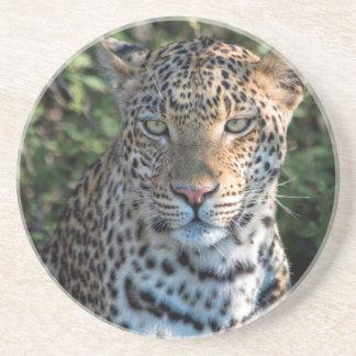 Leopard portrait, close up coasters