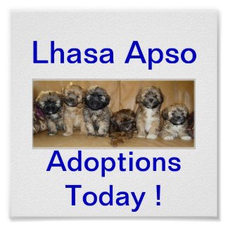 Lhasa Apso Dog Adoptions Today Signs Poster