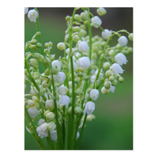 Lily of the valley postcard