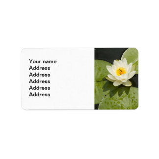 Lily Pads and White Lotus Flower Address Label