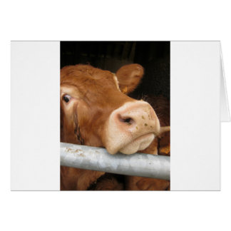 Limousin Cattle (Mad Cow) Greeting Card