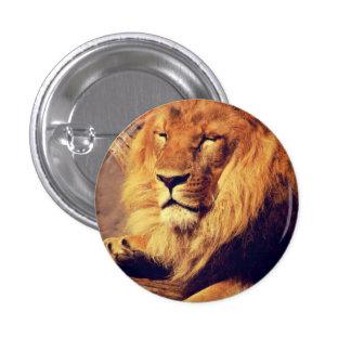 Lion enjoying the afternoon sun 3 cm round badge
