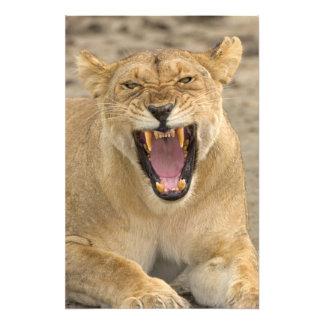 Lioness Snarl B, East Africa, Tanzania, Photo Art