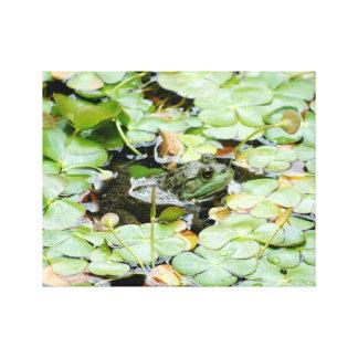 Little Green Frog Canvas Print