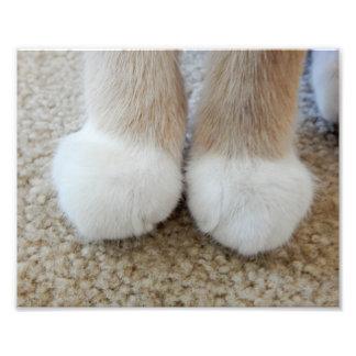 Little White Paws Photo Art