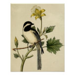 Long Tailed Chickadee Poster