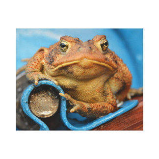 Looking Toadly Awesome In Blue Toad Gallery Wrap Canvas