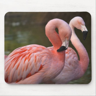 Lovely Flamencos Mouse Pad