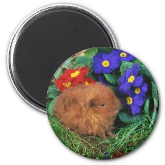 Lovely Hamster 70 6 Cm Round Magnet
