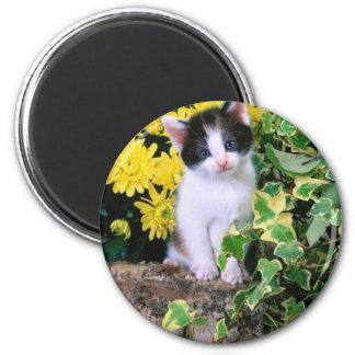 Lovely Kitten 32 6 Cm Round Magnet