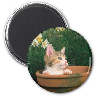 Lovely Kitten 54 6 Cm Round Magnet