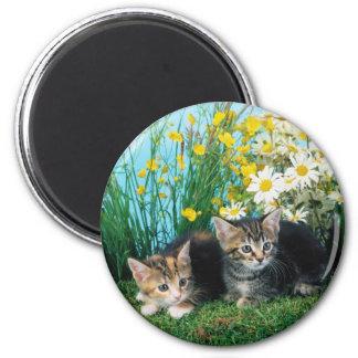 Lovely Kittens 63 6 Cm Round Magnet