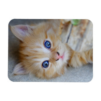 Lovely Red Tabby Kitten Rectangular Photo Magnet