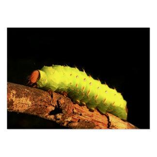 Luna Moth Caterpillar Pack Of Chubby Business Cards