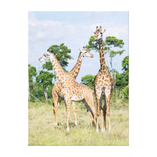 Maasai Giraffe Gallery Wrap Canvas