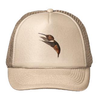 Male Allen's Hummingbird hat