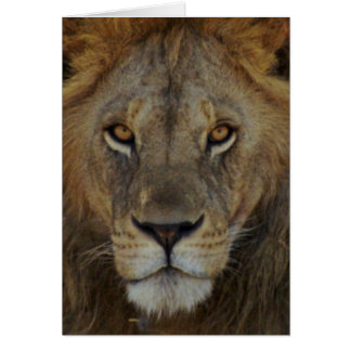 Male Lion Note Card