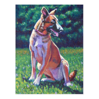 Malinois Shepherd in Grassy Field Postcard