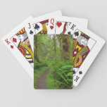 Maple Glade trail, ferns and moss covered Card Decks